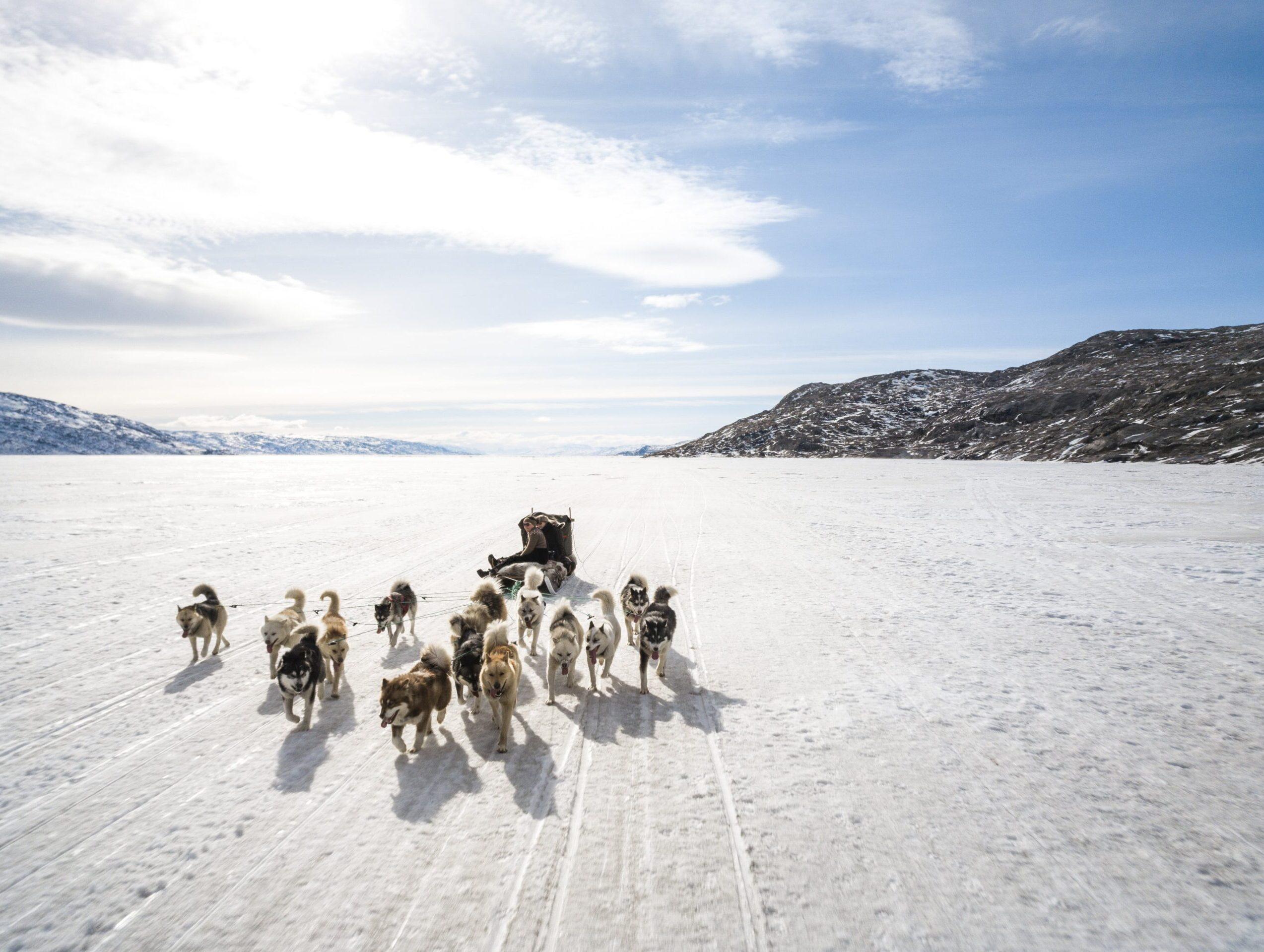 Dog Team Qimmeq Davidsen Olsens ARC-min
